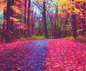 pink, autumn, and tree image
