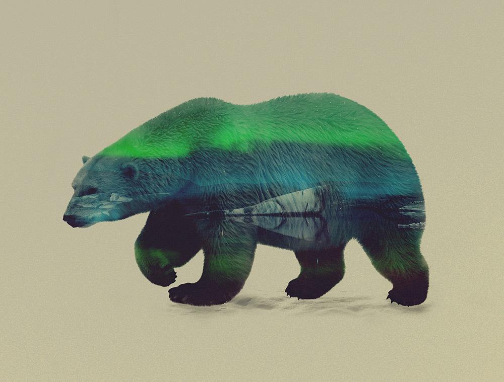 art, animal, and bear image