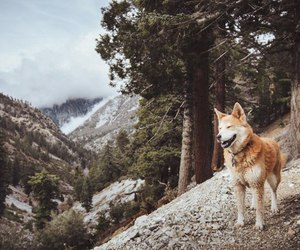 dog, forest, and nature image