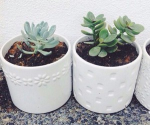 plants, white, and nature image
