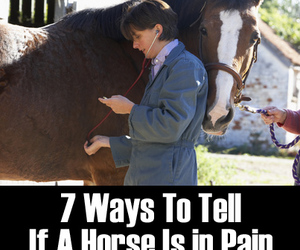 horses, horse tips, and horse health image