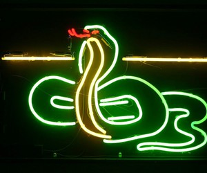 neon and serpiente image