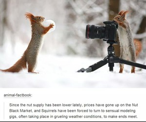 funny, snow, and squirrels image