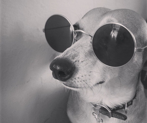 dog and hipster image