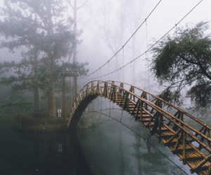bridge, nature, and grunge image