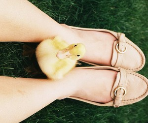 baby, duck, and pet image