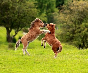 horse, foals, and play image