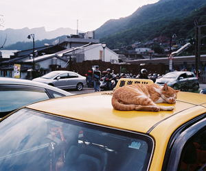 cat, taxi, and animal image