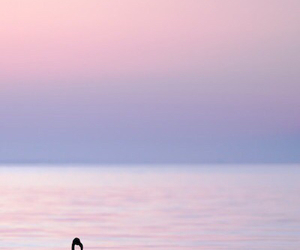 sea, flamingo, and photography image