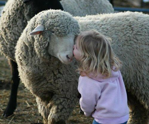 sheep, child, and animal image