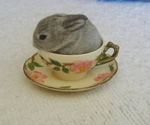 bunny, cute, and cup image
