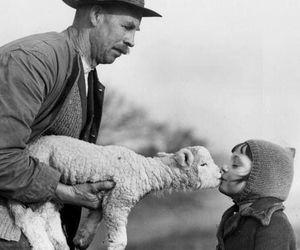 animal, kiss, and lamb image