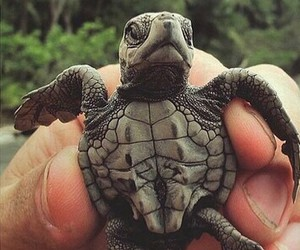 animal, turtle, and cute image