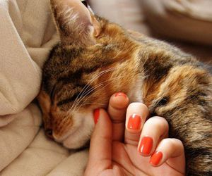 cat, nails, and hand image