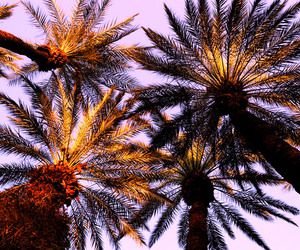 colors, palm tree, and sky image