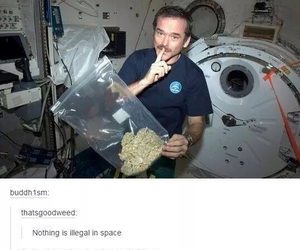 pot, tumblr, and marijuanna image