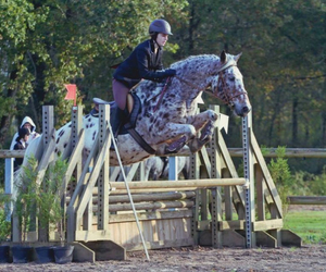 cheval, saut, and cso image