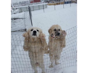 cute, puppies, and snow image