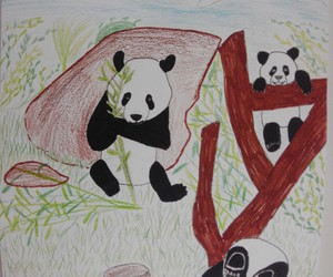 dessin and panda image