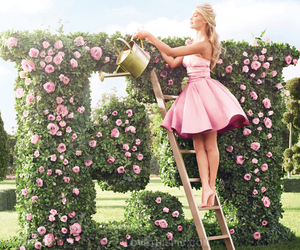 pink, flowers, and dress image