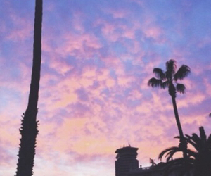 palm trees image