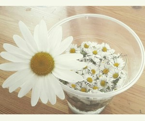 beauty, daisy, and drink image