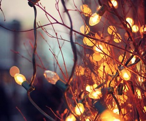 evening, lights, and nature image