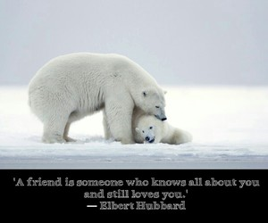 bears, best friends, and bff image