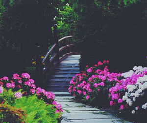 flowers, nature, and bridge image