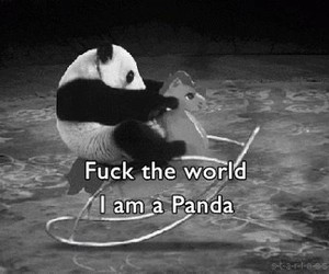 fun, funny, and panda image