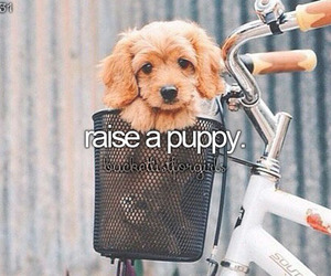 puppy and bucket list image
