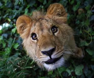animal image
