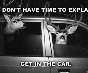 car, funny, and deer image