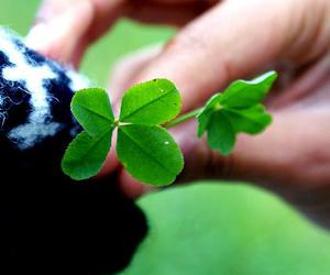 clover, hands, and luck image