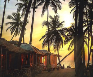 beach, palm trees, and nature image