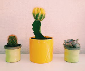cactus, green, and lifestyle image