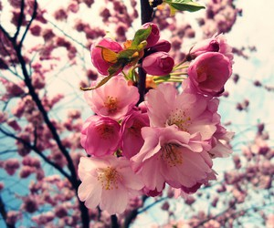 blossoms, blue sky, and filter image