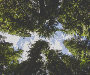 tree, nature, and sky image