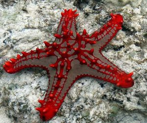 red and starfish image