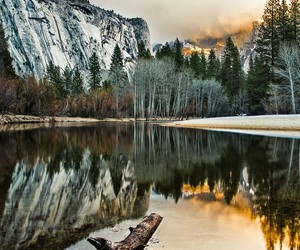 beauty, trees, and water image