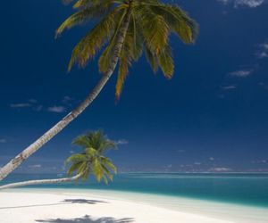 beach, escape, and palm trees image