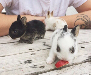 rabbit, animals, and cute image