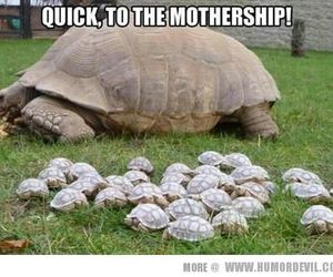adorable, animals, and babies image