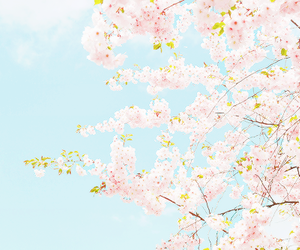flowers, nature, and pastel image