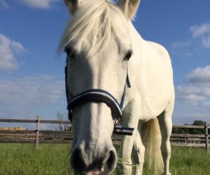 belgium, horse, and my image