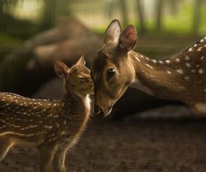 animal, love, and cute image