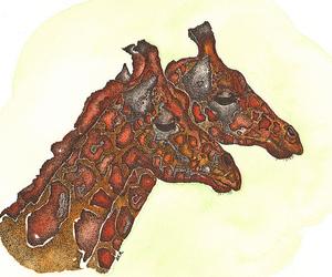 animals, giraffes, and illustration image