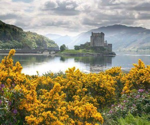 castle, scotland, and flowers image