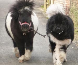 dog, pony, and horse image