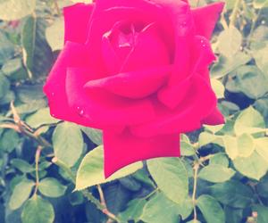 rosa, impressionant, and beautiful image